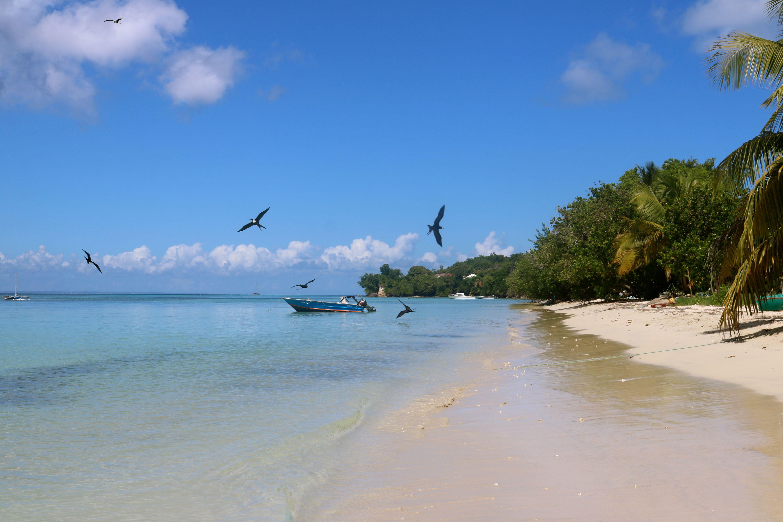 A beach of Marie-Galante