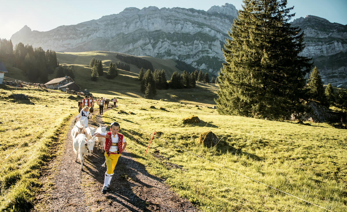 Descente de vache alpine Schwaegalp, à Saentis, Suisse orientale (Mareycke Frehner)