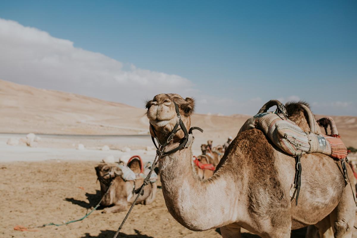 Les tours du désert du Néguev gagnent en popularité