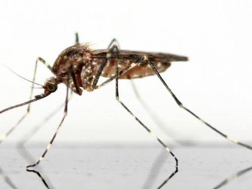 Zika : le gouvernement recommande aux femmes enceintes d'éviter Miami