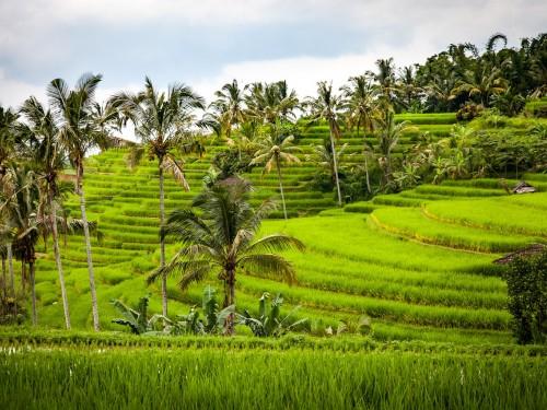 Des observatoires indonésiens de tourisme durable entrent dans le Réseau de l'OMT