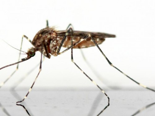 Le Zika n'est plus une urgence mais reste un défi de santé publique