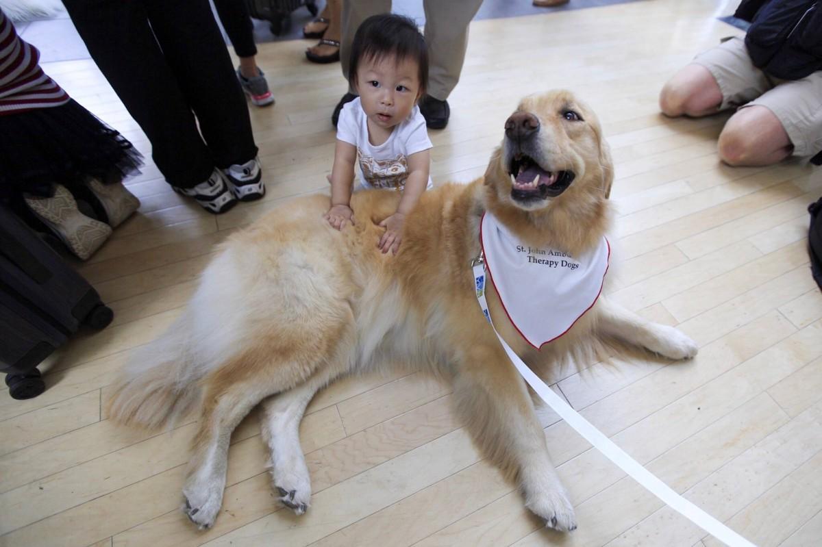 L'aéroport de Vancouver accueille ses premiers chiens de thérapie