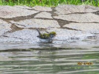 Petite baignade au Costa Rica