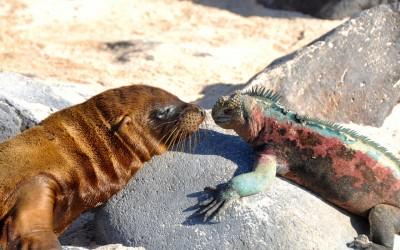 Rencontre inusitée, Îles Galapagos