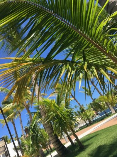 Qui Riu republica dit palmiers