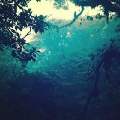 Forêt dans les nuages, Costa Rica