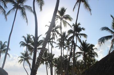 Sous le soleil des palmiers