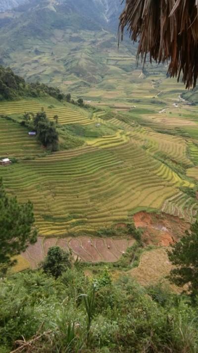 Rizières, Région de Mu Cang Chai, Vietnam