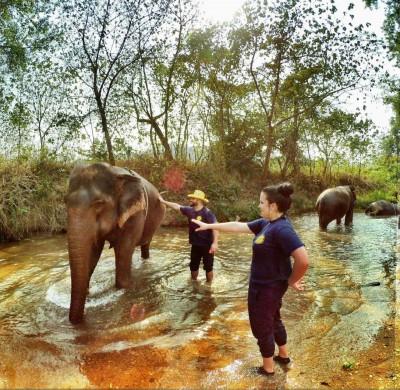 Refuge d'éléphants en liberté, Chiang Mai, Thailand