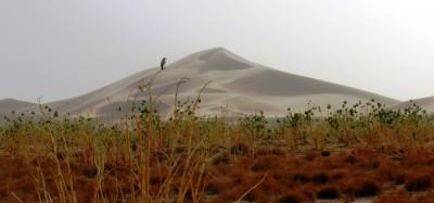 Dune du désert de Chegaga au Maroc