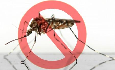 Virus Zika : état de la situation