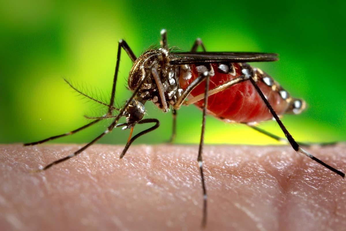 Les Québécois attraperaient de plus en plus la malaria