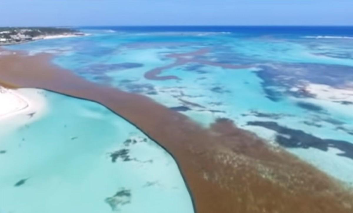 Gestion des algues sargasses : la République dominicaine invente un système ingénieux