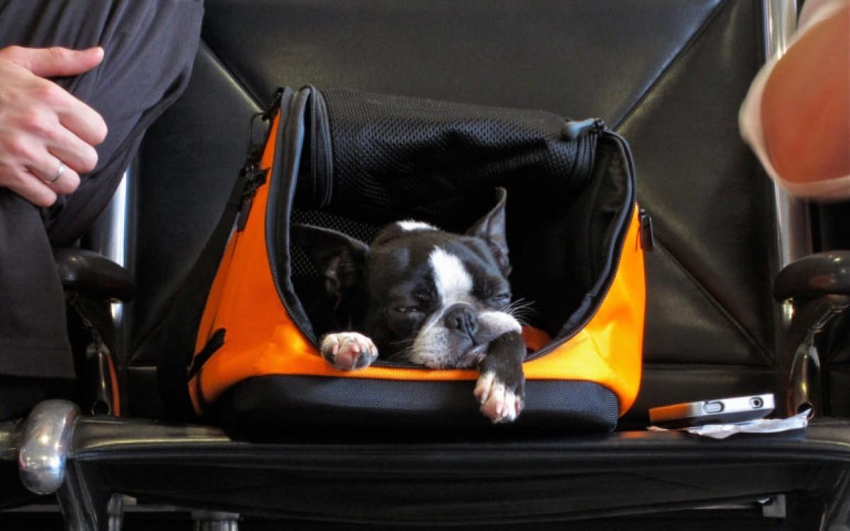 Voyager en cabine avec son animal sur les ailes d'Air Transat