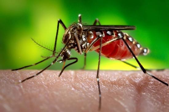 Zika : risque désormais minimal dans les Caraïbes