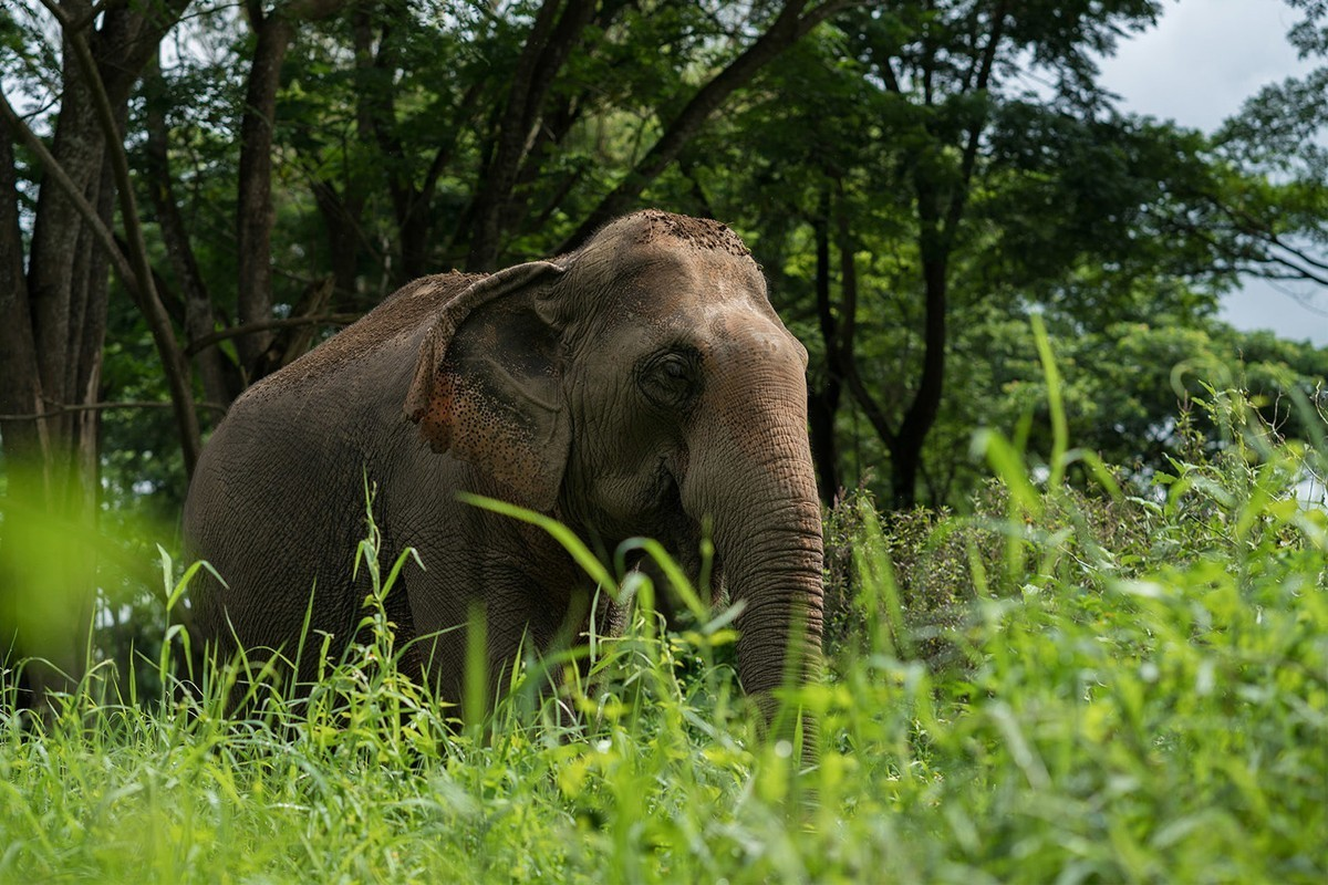 Le tourisme animalier peu populaire, révèle la UNWTO