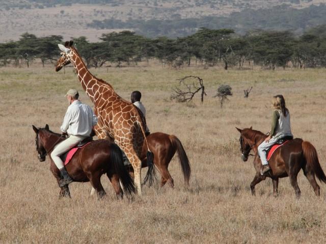 4 safaris nouveau genre