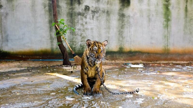 5 excursions animales qu'il ne faut jamais vendre