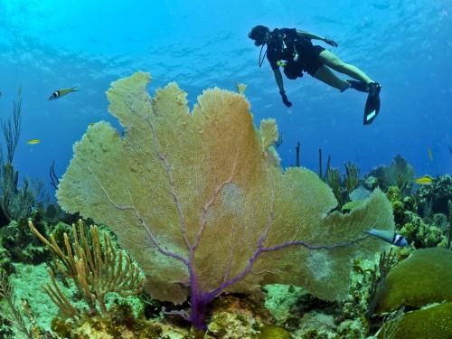 Cet état du Pacifique va bannir les crèmes solaires pour sauver le corail