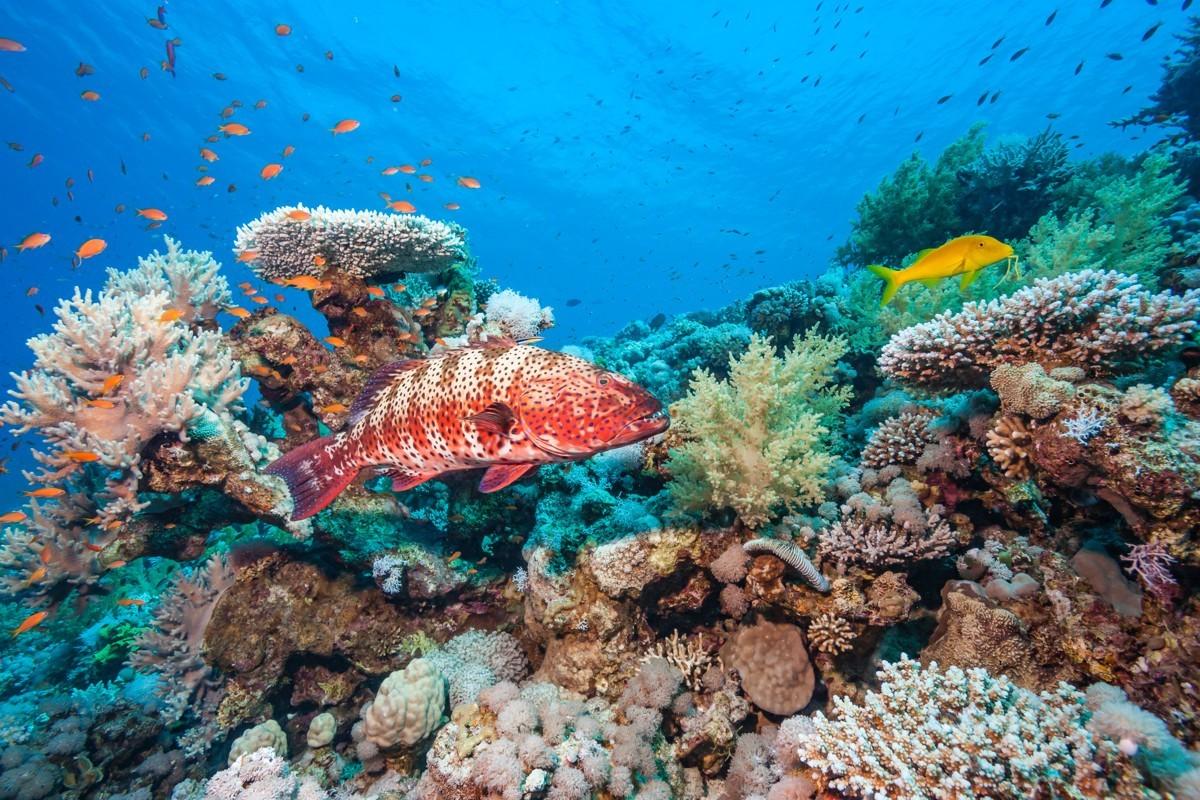 Les Caraïbes s'unissent pour sauver les coraux
