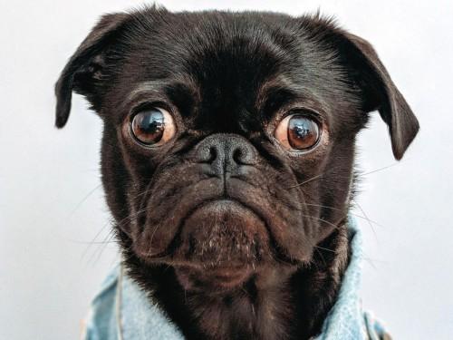 WestJet : pétition contre l'augmentation des frais sur les animaux de compagnie