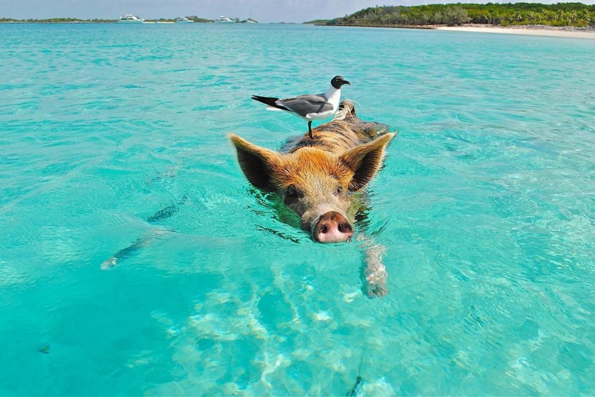 Au-delà des plages aux Bahamas