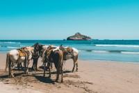 HAL ajoute 20 croisières sur la Riviera mexicaine en 2019-2020