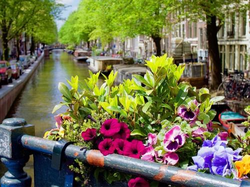 Petit guide végétal du printemps aux Pays-Bas