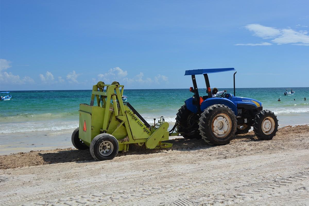 Solutions aux algues sargasses: Playa del Carmen étudie six projets