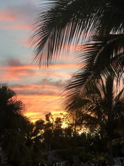 Couché de Soleil sous le palmier