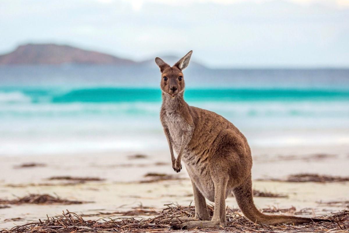 « L'Australie n'est pas aussi loin que vous le pensez », disent les spécialistes