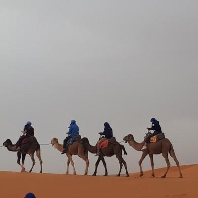 Quelque part dans le désert