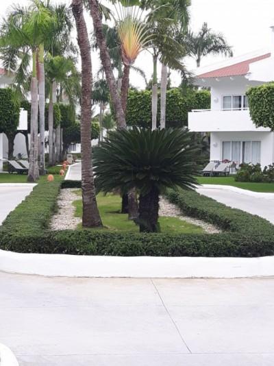 Petits palmiers