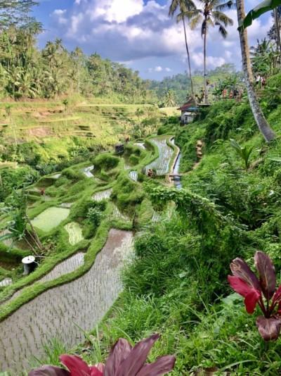 Magnifique et lumineuse rizière de Tegallalang