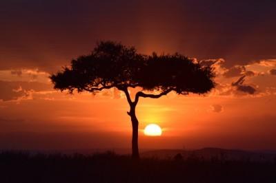 Coucher de soleil sur la Masai Mara