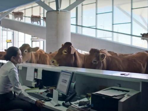 WestJet se démarque du troupeau avec une nouvelle campagne vidéo amusante