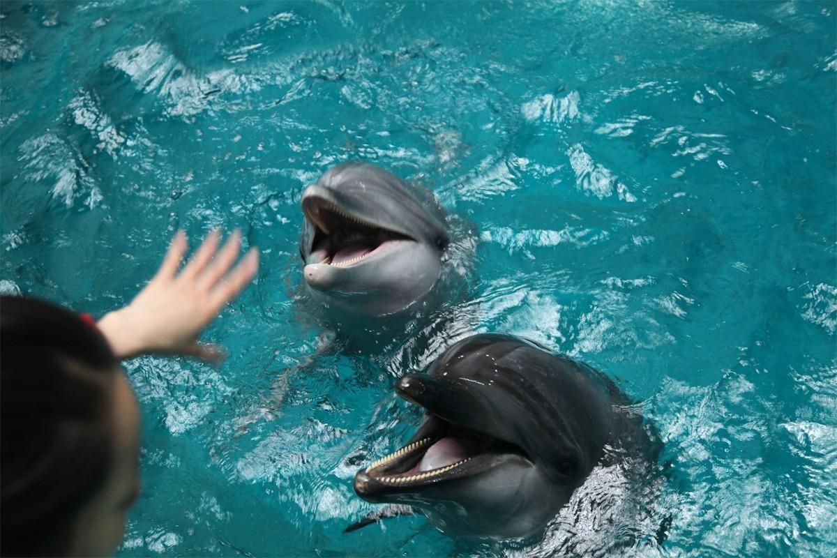 Air Canada et Transat promettent d'enlever le tourisme avec les dauphins de leurs forfaits