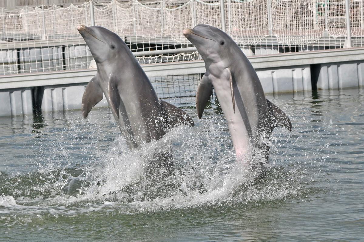 Sunwing et WestJet retirent le tourisme avec les dauphins de leurs forfaits vacances