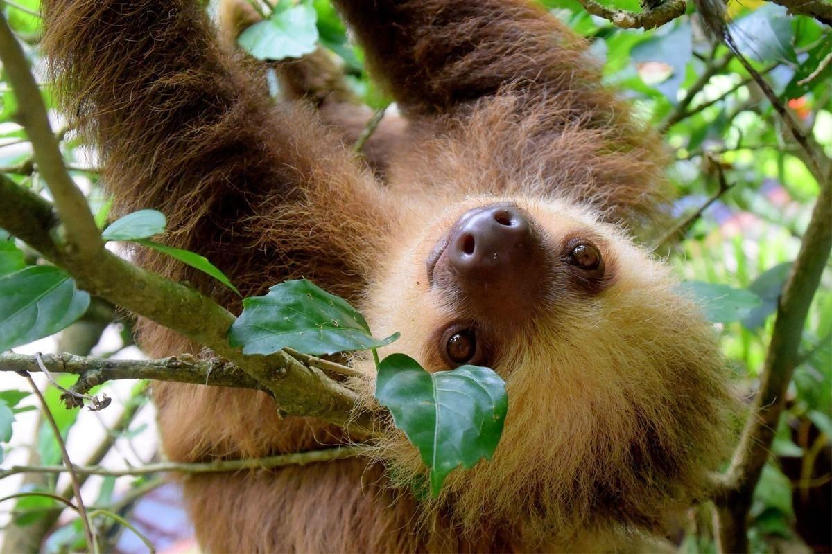 Le Costa Rica met fin aux selfies avec une nouvelle campagne sur la vie sauvage