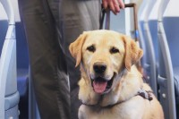 Quand l'animal d'assistance ou de soutien émotionnel n'est PAS un chien