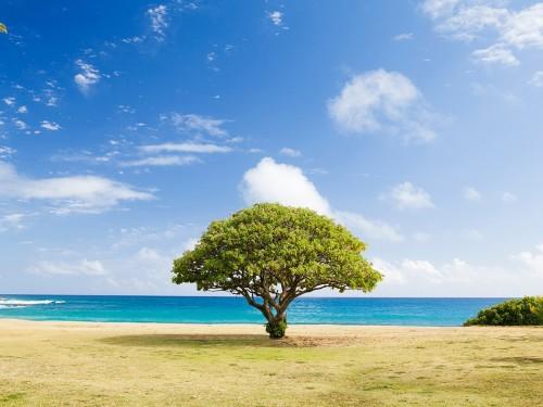 Voyages Gendron lance un programme de compensation carbone pour ses clients