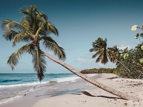 Air Canada reprend ses vols vers la Martinique en août