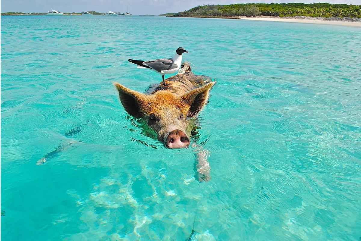 Les Bahamas abandonnent la quarantaine et met en place de nouveaux protocoles de test à partir du 1er novembre