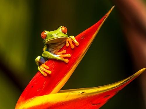 Le Costa Rica lance un programme spécialisé pour les pros du voyage