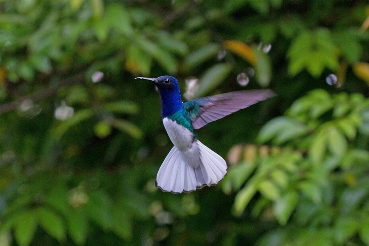 UNESCO : 25 sites rejoignent le Réseau mondial des réserves de biosphère
