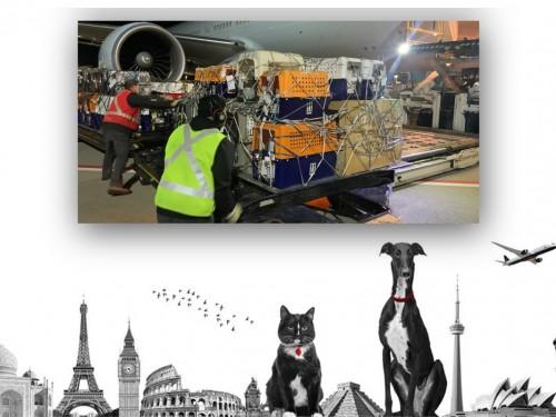 70 chats et chiens volent vers l'Australie à bord de « l'avion de Noé » d'Air Canada