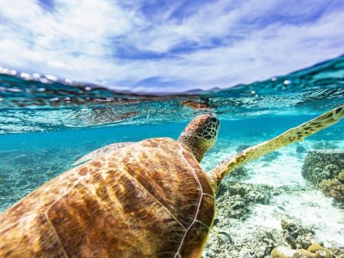Sandals célèbre la «Journée mondiale des Océans»