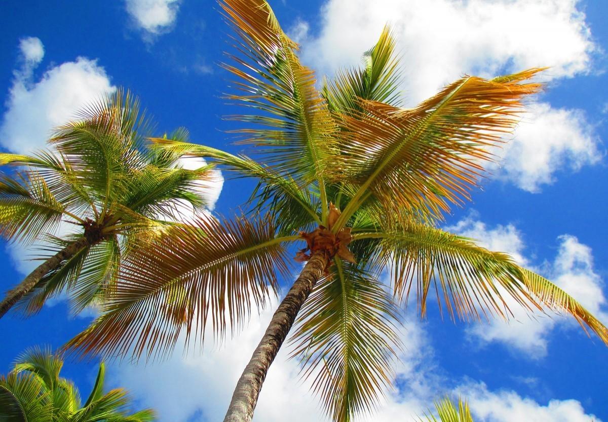 L'Organisation de tourisme des Caraïbes lance un réseau de tourisme communautaire