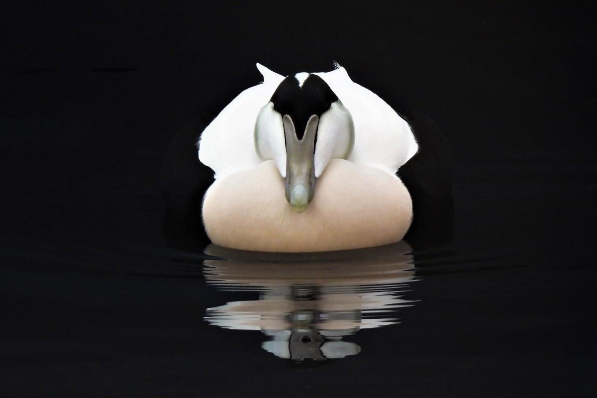 Félicitations à Isabelle St-Amand, photographe aviaire primée !